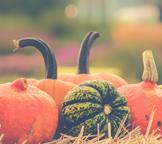 Inaugural Carbon County Harvest Fair- Oct. 2-4