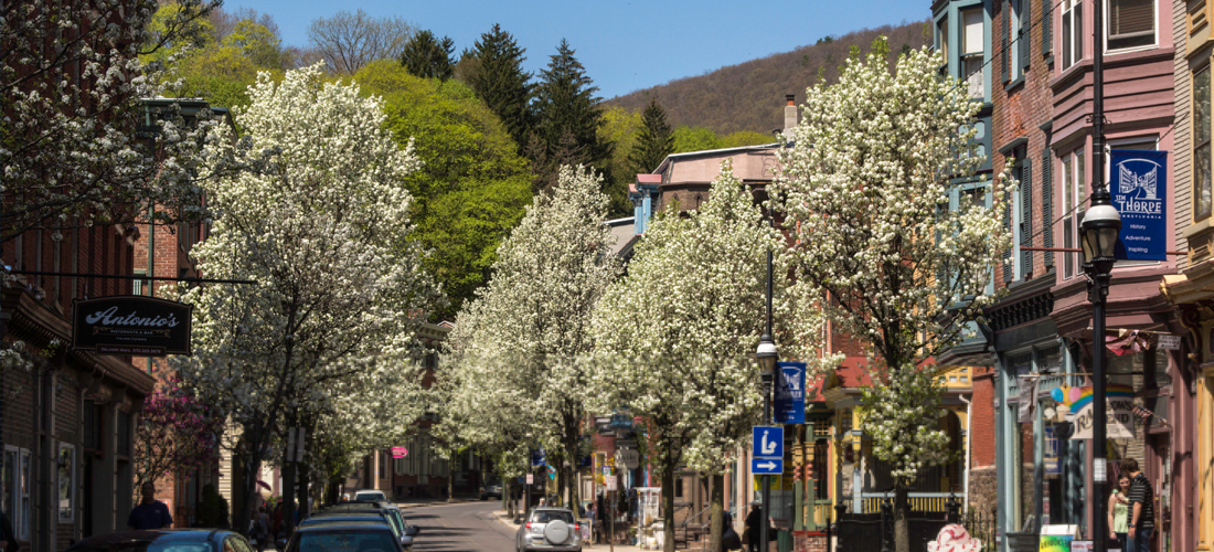 Flowering trees lining Broadway in Jim Thorpe