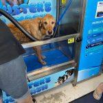 Dog in dog wash