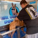 Dog owner washing dog in dog wash