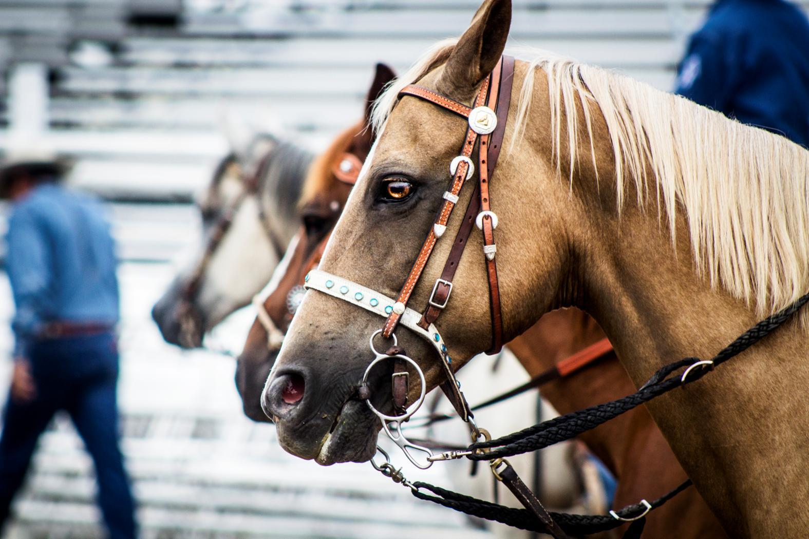 Rodeo Horses_Justin & Abbi Lindsey