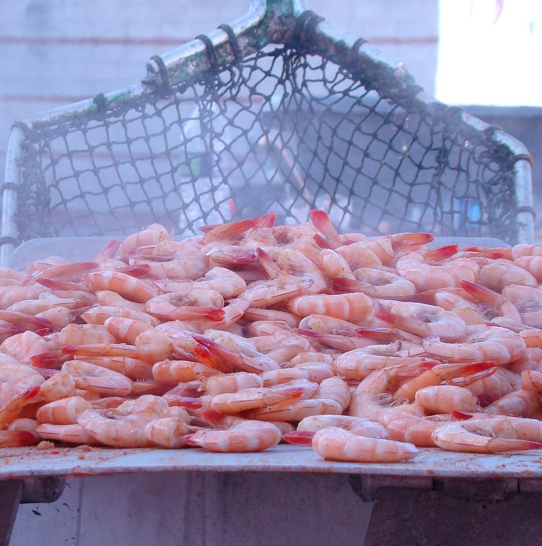 page 16_Shrimp Boil