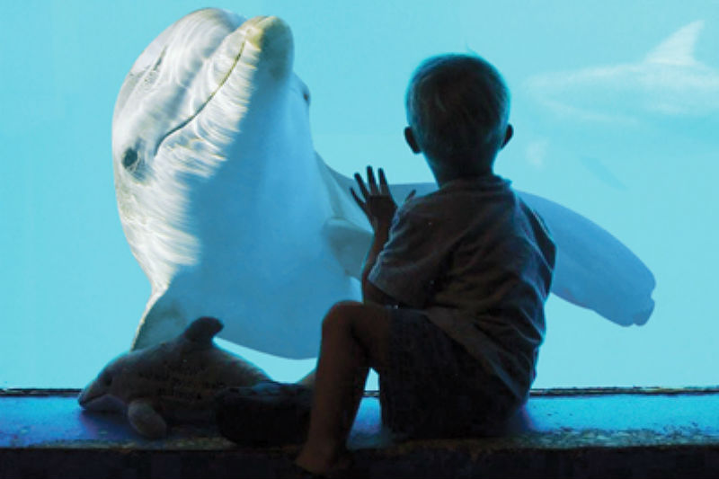 Winter the Dolphin at Clearwater Marine Aquarium - Family Friendly Activities on Tampa Bay Beaches