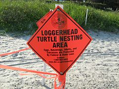 LoggerHead Turtle Nesting Area Sign Posted on Beach