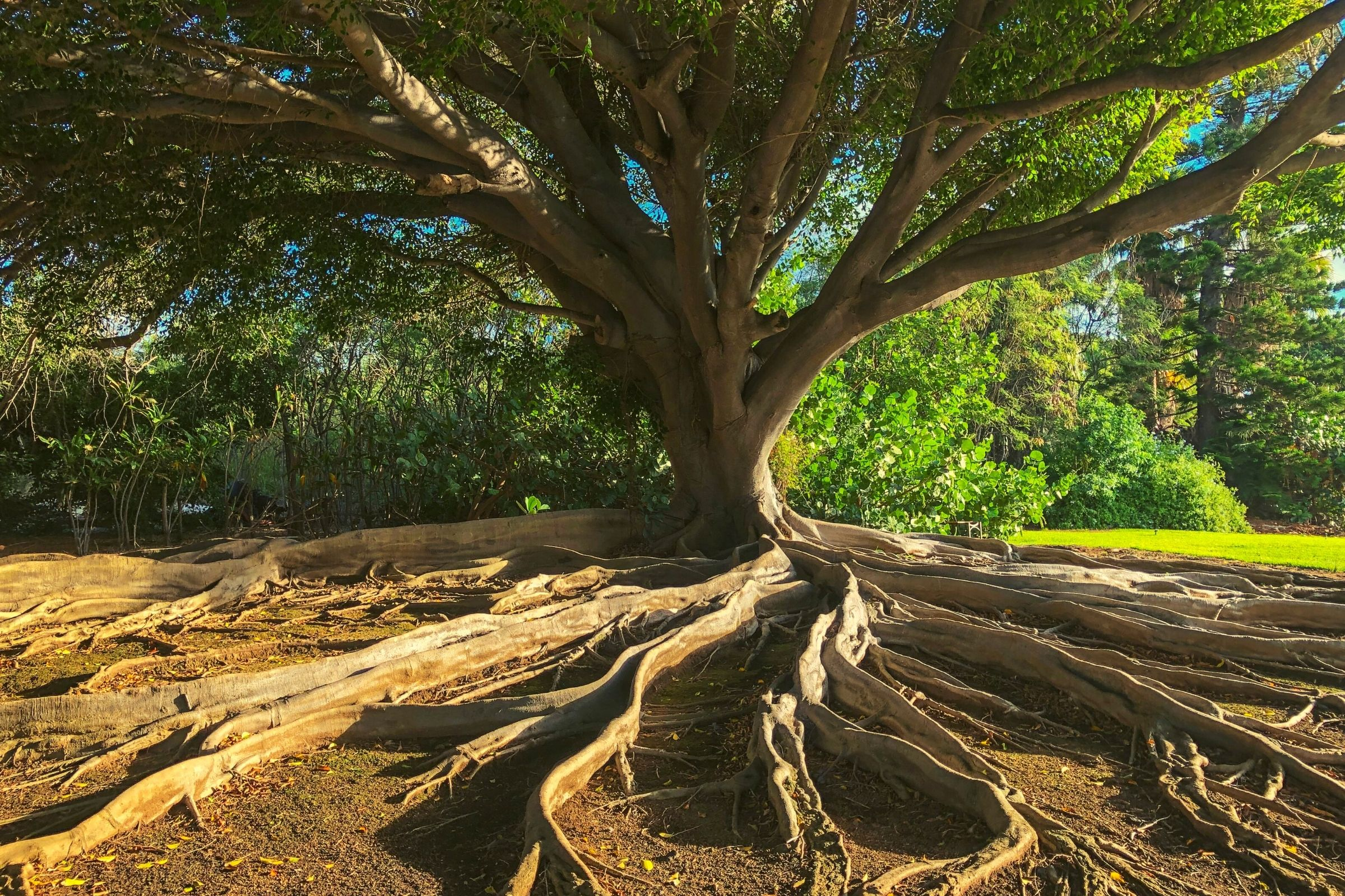 The Roots That Bind the Tree That Stands