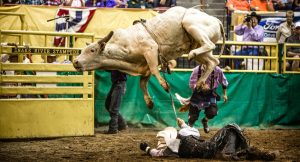 Picture of a rodeo with a bull and rider who fell off