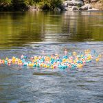 duck race in the middle of river