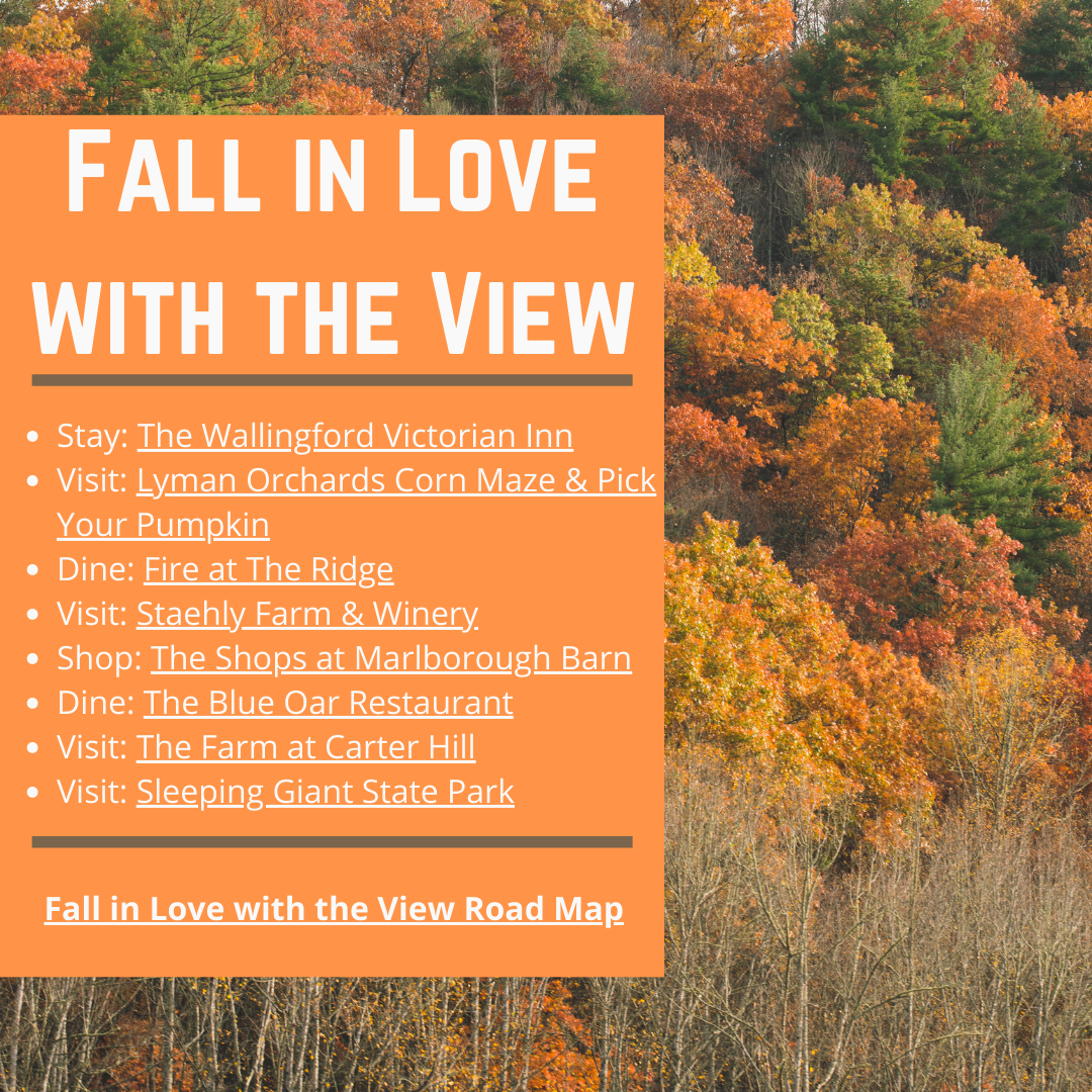 fall in love with the view