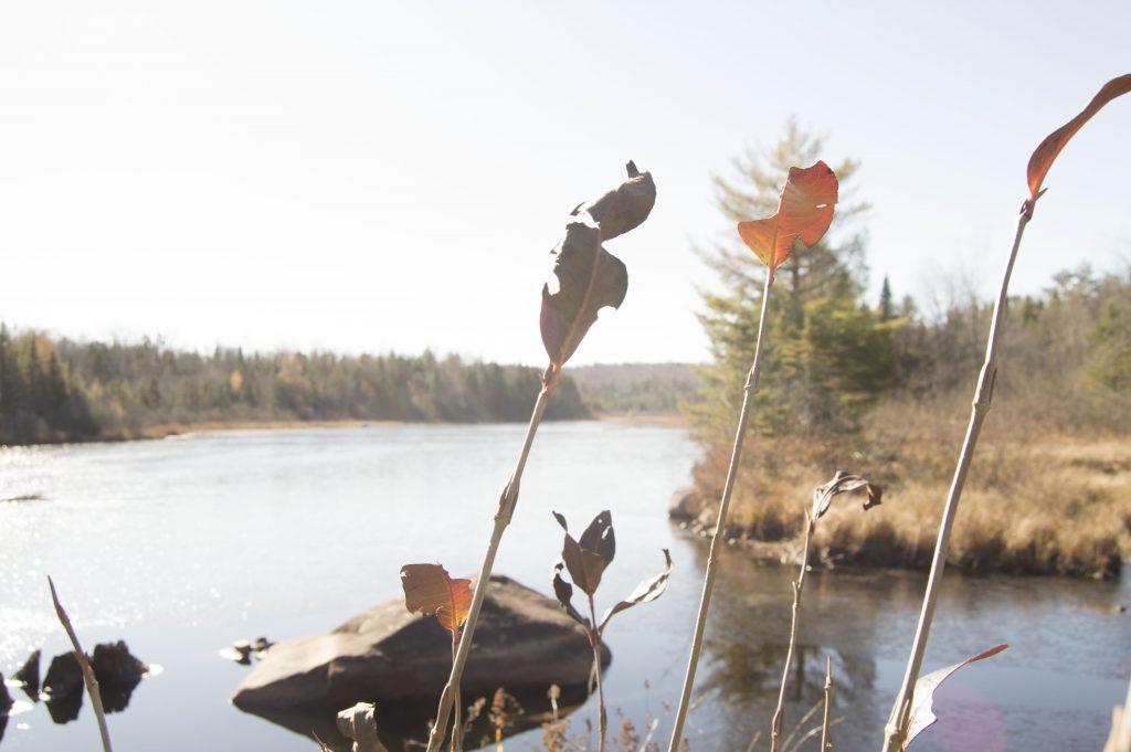 leaves over watr