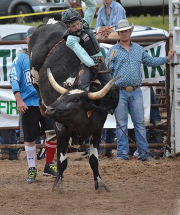 bull rider in action