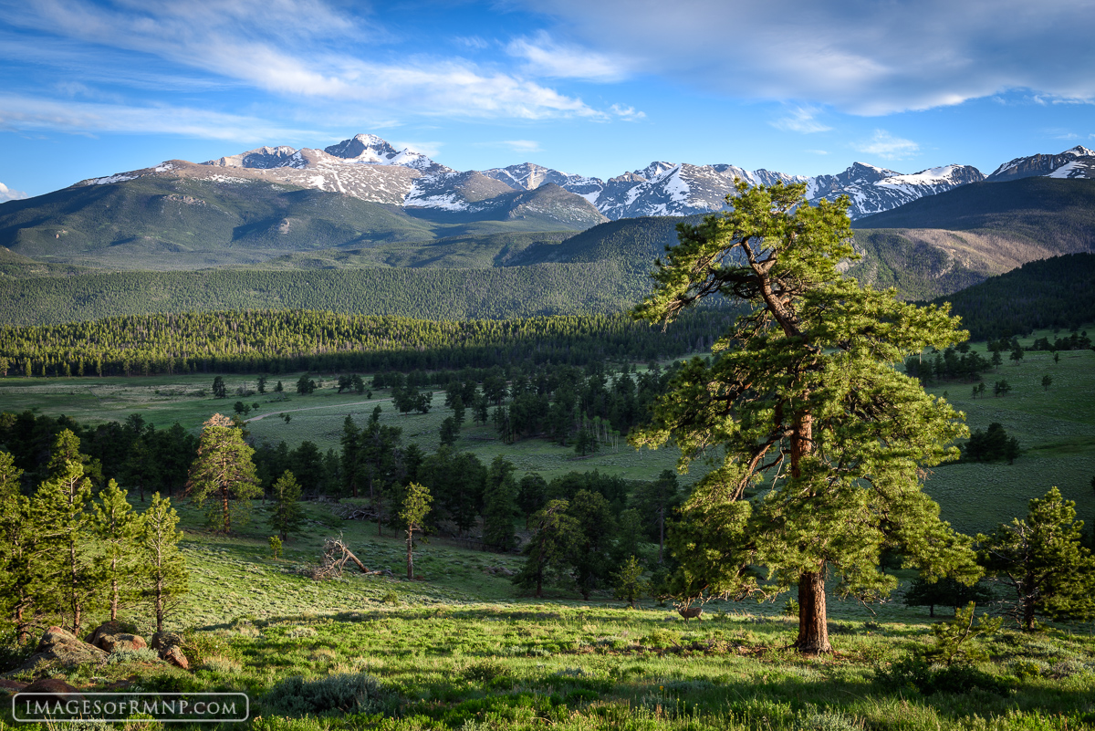 Beauty reaches its climax in Beaver Meadows, Rocky Mountain National Park in early June.