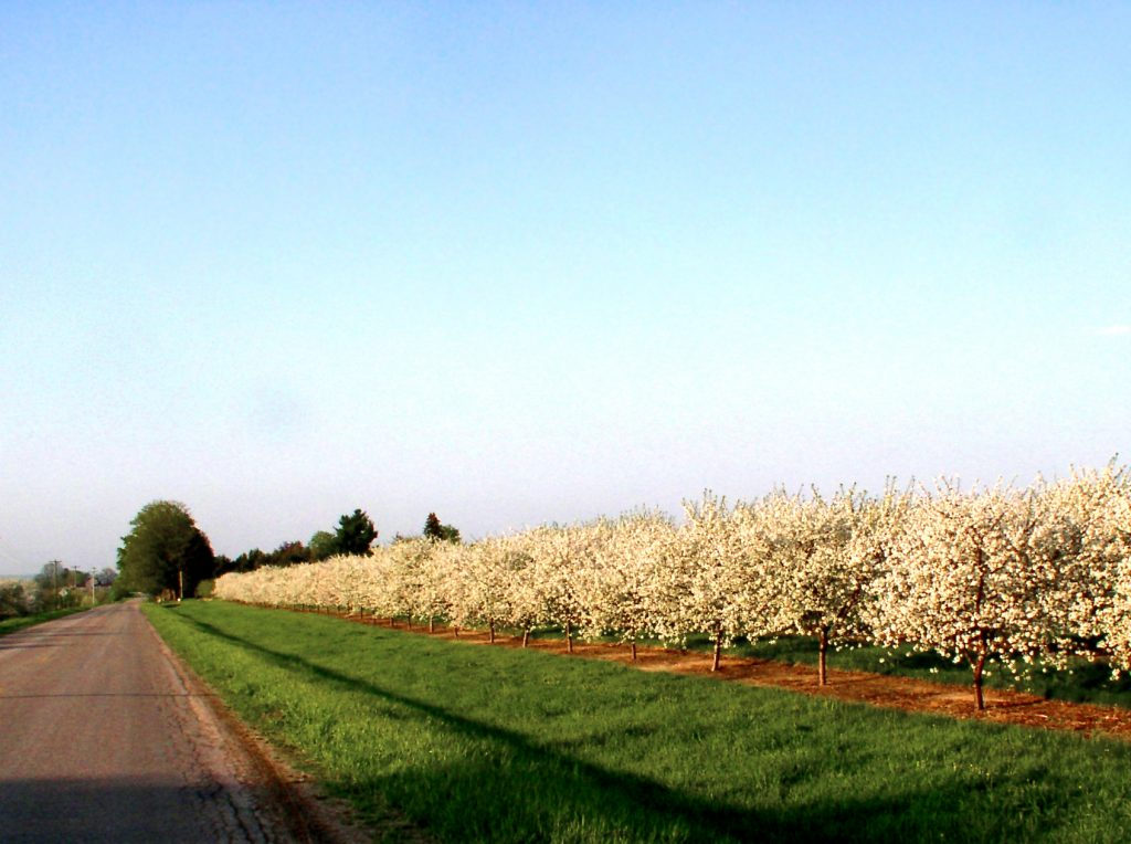 Orchard on Munro Road
