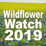 Wildflower_Watch_2019