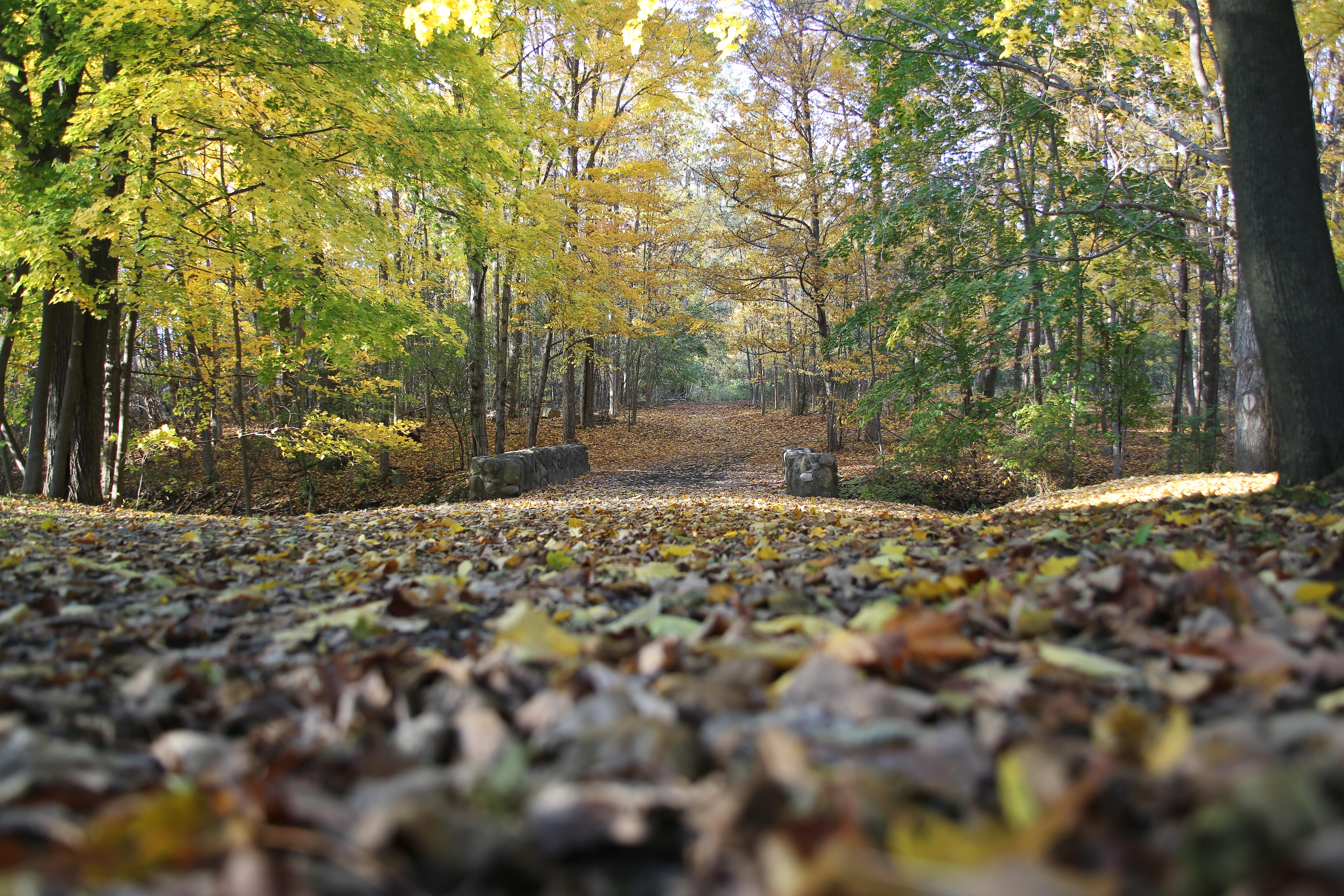 Melody Burri Fall trail