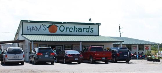 Hams-Orchard-Trip-002