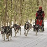 Person Dog Sledding