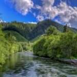 McKenzie_River_Daytime_by_Mike_Shaw_-_RIGHTS_FREE_(2)_gallery