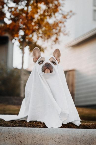 Halloween Pet for Website