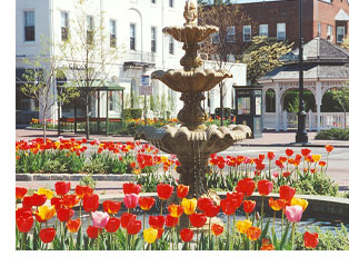 fountain & tulip garden