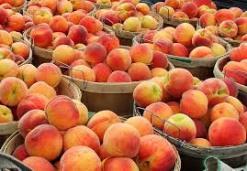 Peaches_247x171