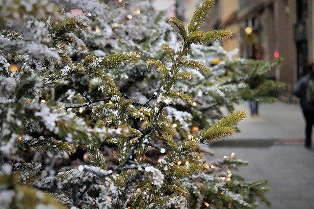 christmas-tree-4679463_640