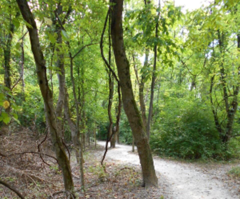 spring branch trail mastodon 1