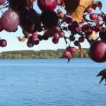 Walt photo of lake