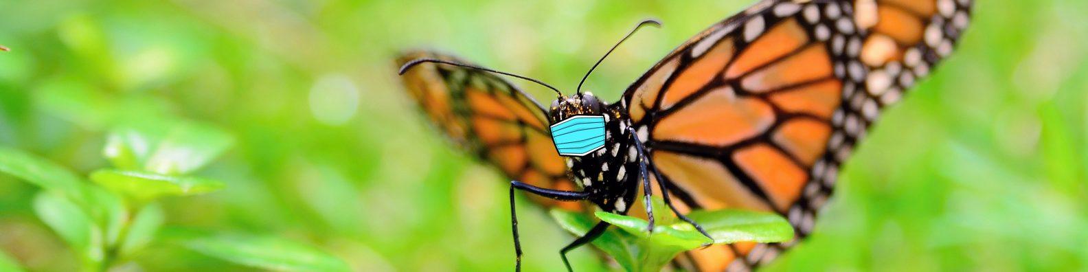 masked monarch
