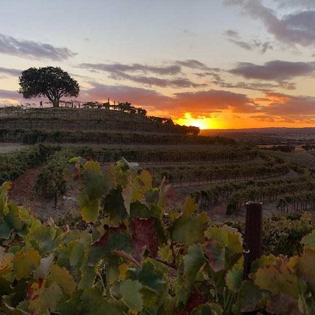 Pear Valley Vineyard