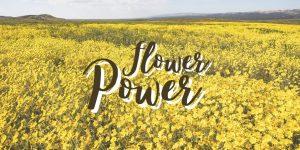 flower power blog