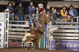 Rodeo - Bull Rider