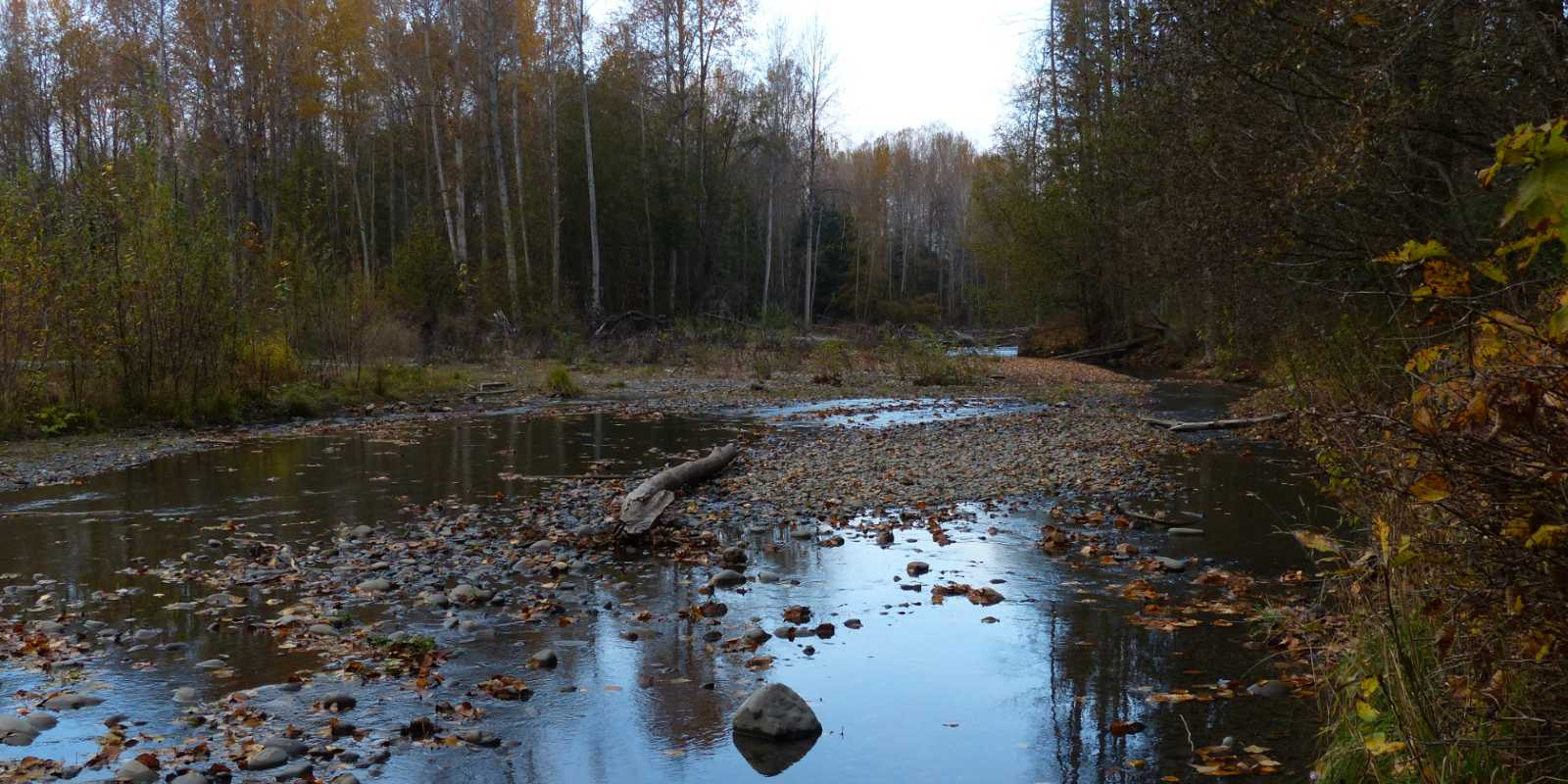 The Dungeness River, seen at a low flow period, is named after the Dungeness Spit.