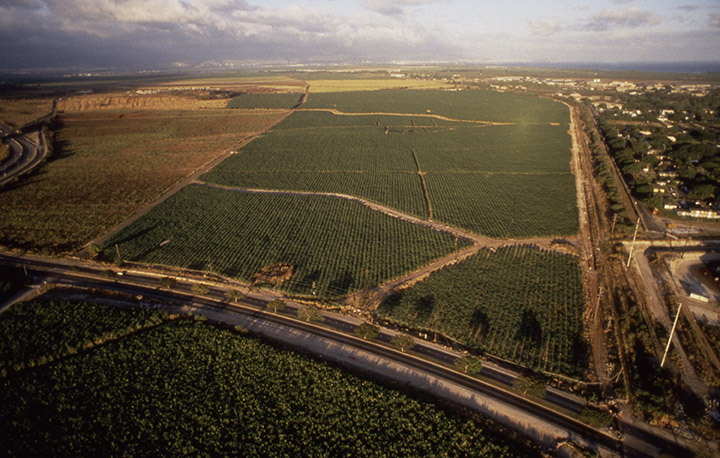 aerial view of city of kapolei circa 1990 - sugar cane fields