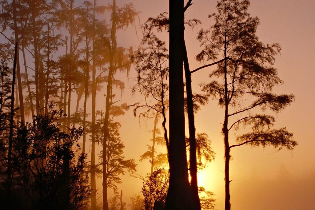 Foggy swamp at sunset