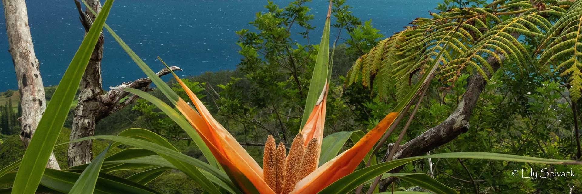 orange flower with ocean in background