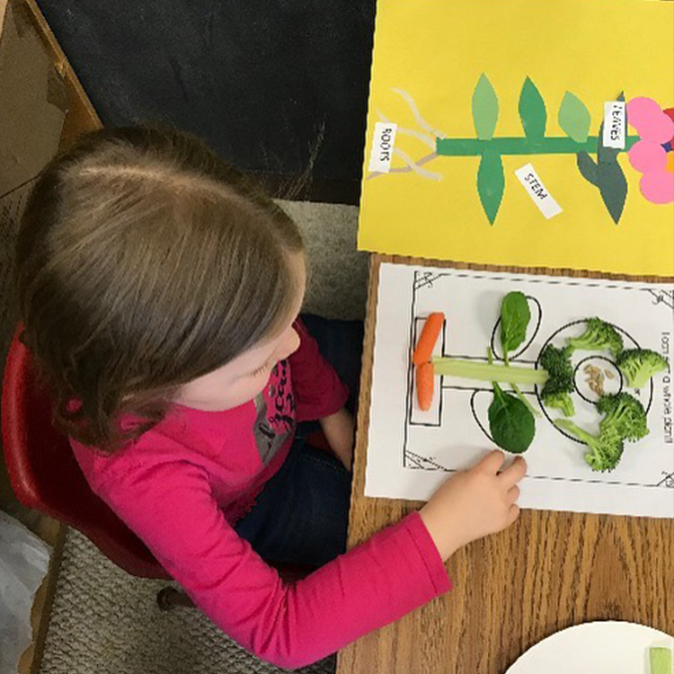 Dana Bluhm - fruit and veg learning project