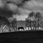 George S. Gati, Horse on the Ridge
