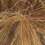 Patricia Carr, Winter Grass #1