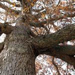Edrie Bays, Life: Autumn