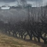 Phylis Buchanan, Orchard