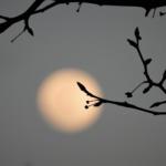 Patricia Malanga, Wolf Moon