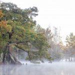 Alan Raasch, Cypress Fog