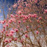 Sammy Allen, Twilight Wharton Garden