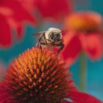 Teresa Woodford, Bumblebee Feast