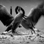Bobbye Terry, Fight or Flight