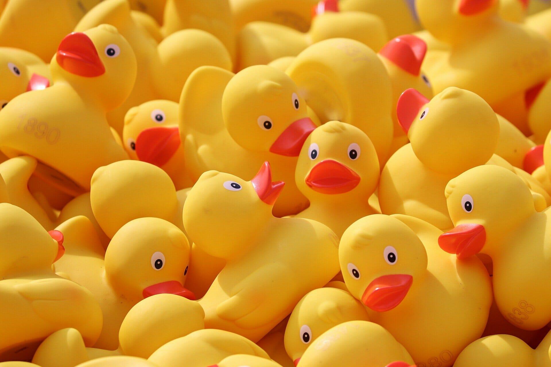 Susie The Duck Derby