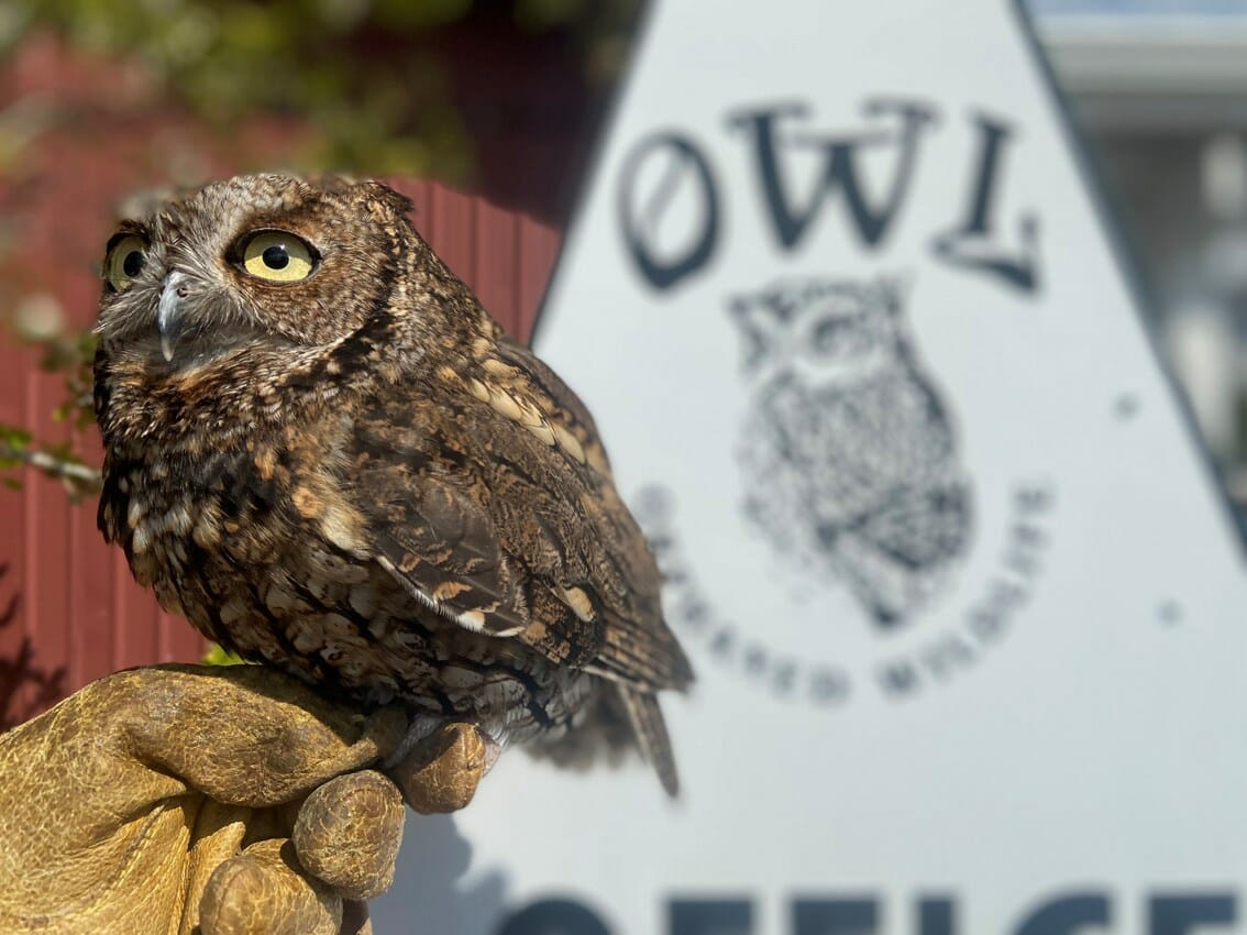 1599240-owl-reopens