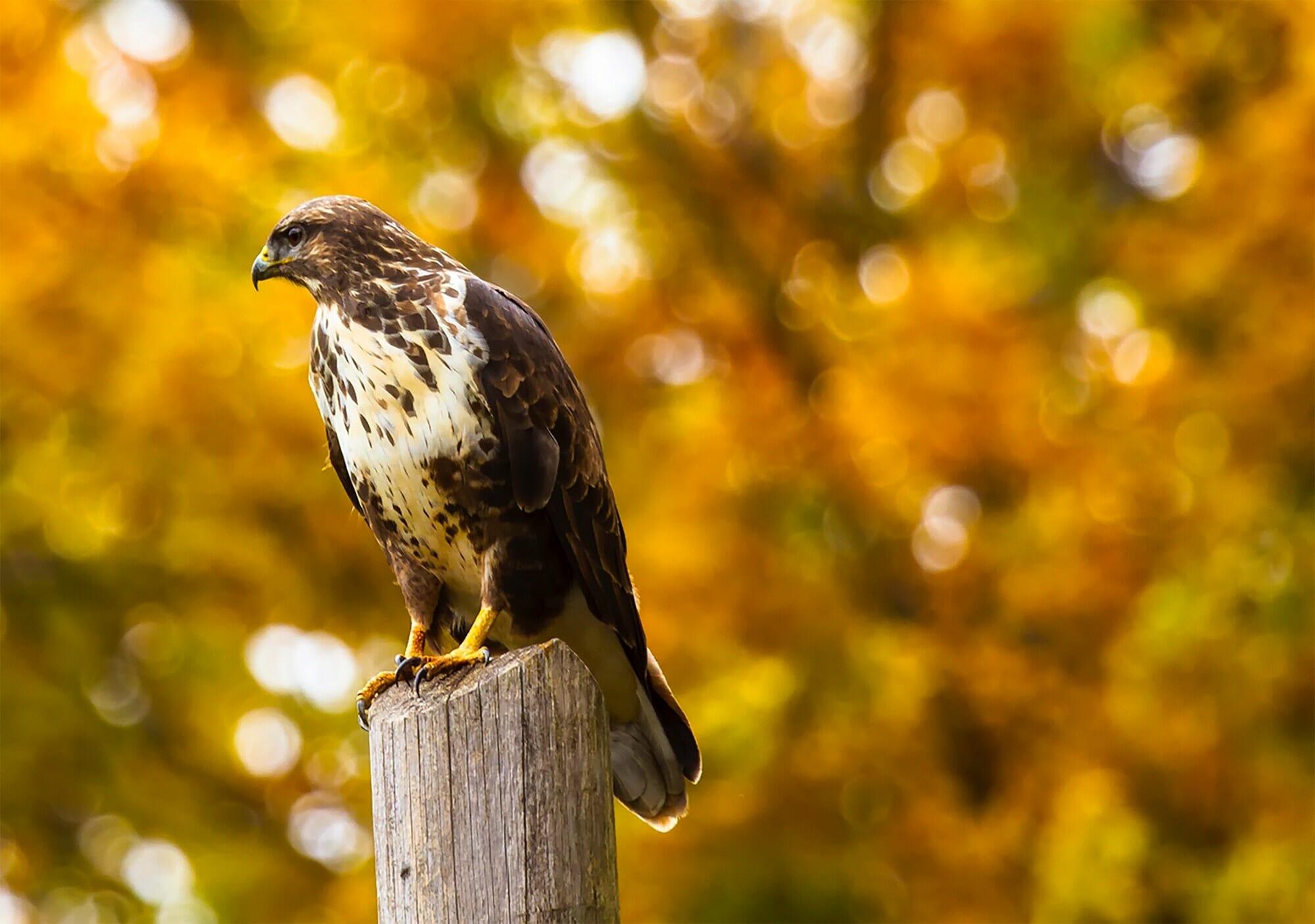 Birding in Delta