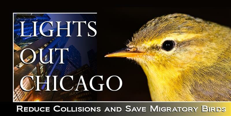 Lights Out Chicago