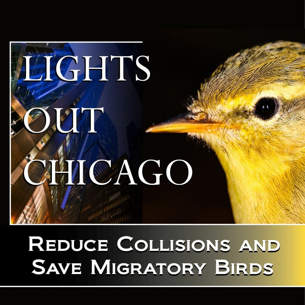 lights-out-chicago_thumb